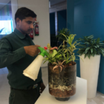 Plants Rent for Office – Garden On hire
